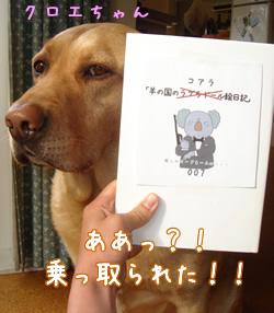 コアラ絵日記?!