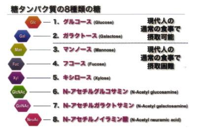 8種類の糖鎖�