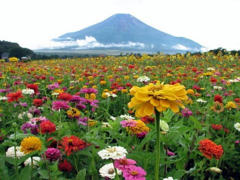 女性ファン獲得のため外野をお花畑にしよう(提案)