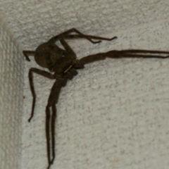 蜘蛛を嫌いになった理由