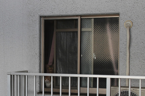 1504-cats-greet-in-the-window-6