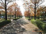 三国湊の運動公園の並木