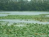 三国湊の秋の鴨池