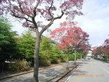 三国湊の役場前の木々