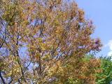 三国湊の未来館の木々