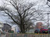 三国湊の未来館の桜の木