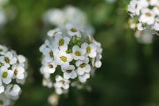 小さな花5
