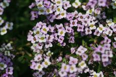 小さな花6