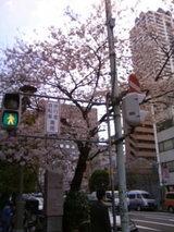 桜が舞い散る季節まであと少し