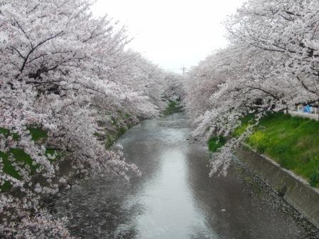 a2011_0411sakura0013