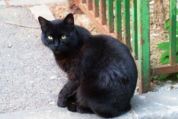 猫をひき逃げしたら過失致死傷罪で罰金。アメリカ・ニューハンプシャー州で法律の修正案が可決