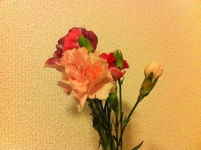 IMG_7230