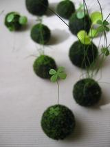 小さな苔玉(水辺の植物)@コープカルチャー大久保のご案内