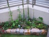 庭に植えよう!〜28〜