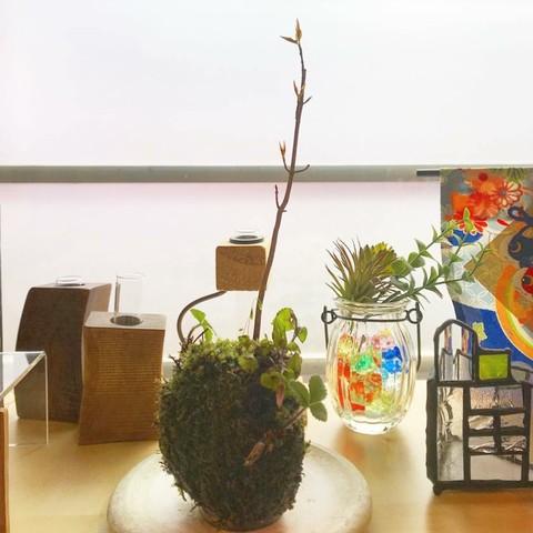 2H苔玉教室〜早春の苔玉〜リポート�