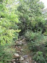苔玉で楽しむ森の風景@北山緑化植物園 リポート