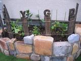 庭に植えよう!〜29〜