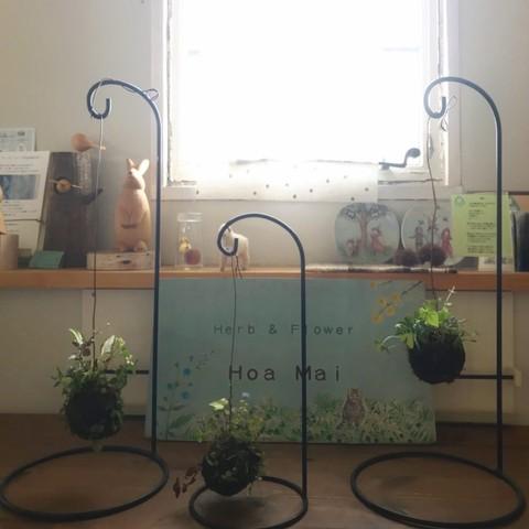 夏の苔玉作りへのお誘い@つばめ軽食店 リポート�
