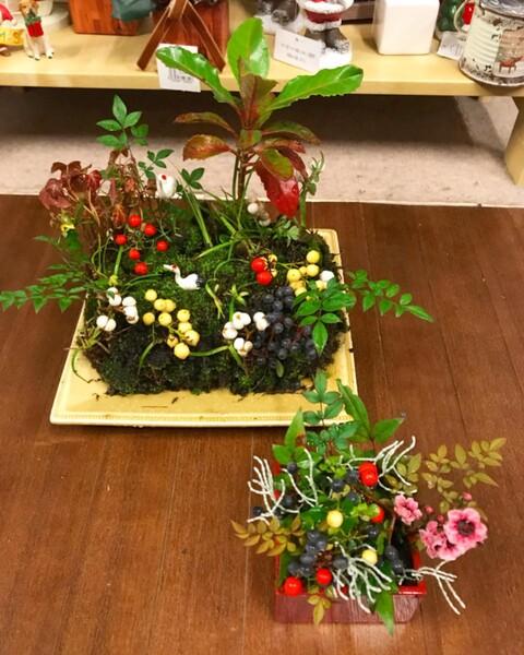 2H苔玉教室〜迎春の苔玉 〜リポート�