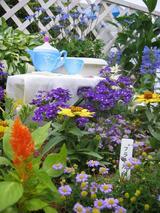 フラワーフェスティバルin西宮 2010〜6〜