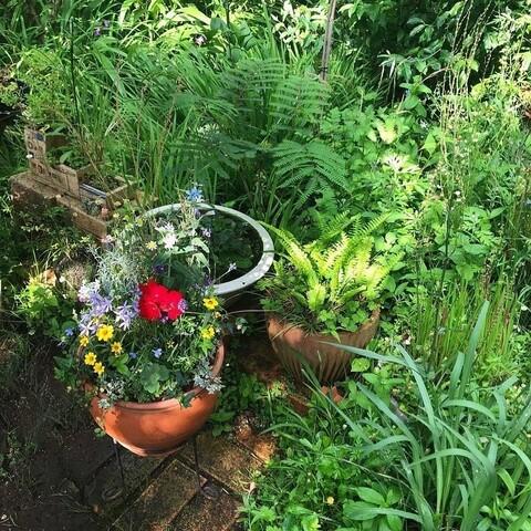 庭で生まれた寄せ植え