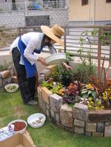 庭に植えよう!〜24〜