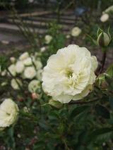 北山緑化植物園リポート〜9〜