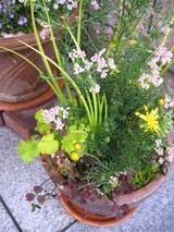 花を植える楽しみ〜2〜