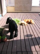庭に植えよう!�