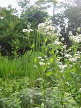 6月の庭〜1〜