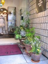 花を植える楽しみ〜1〜