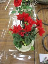 シクラメンや薔薇の苔玉サンプル