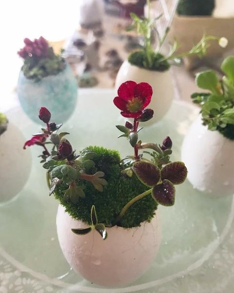 春を彩る、たまごの寄せ植え教室@YUI旅と暮らしとのご案内