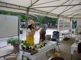 フラワーフェスティバルin西宮 2010〜10〜