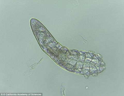 Mites that live on your face