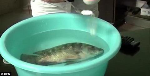 China fish brings back life