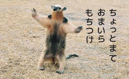 https://livedoor.blogimg.jp/hobo2ch/imgs/e/b/eb8265e5.png