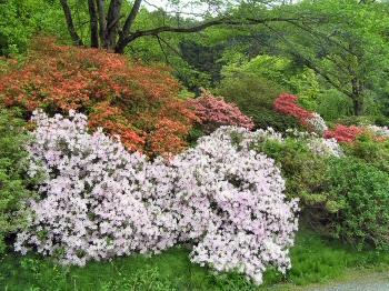 西光寺庭園