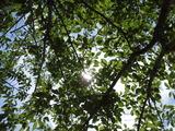 木陰が嬉しい季節になりました。。。