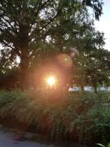 夕日が眩しい。。。