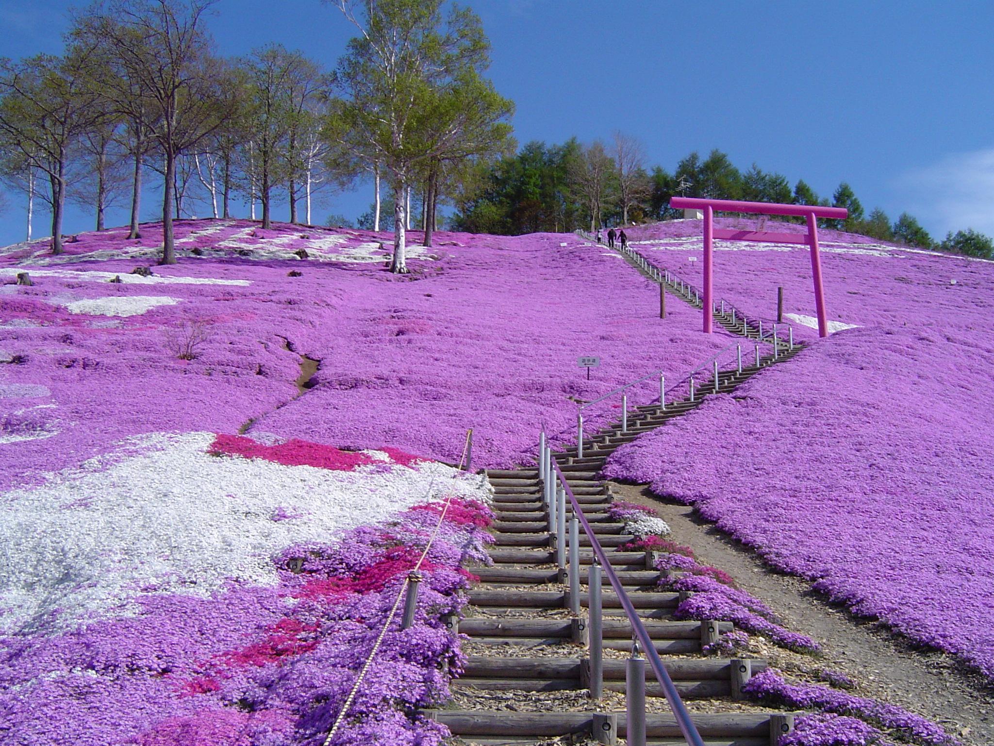 北海道 ウェディングフォト