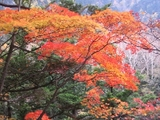 緑の中の紅葉