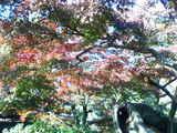 園内の木々2
