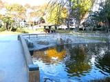 池とアヒル