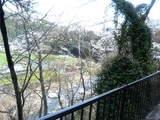 桜と渓谷2