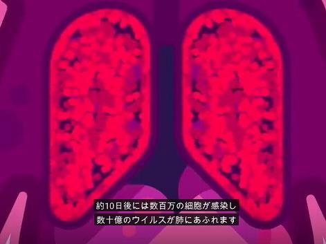 2肺@630