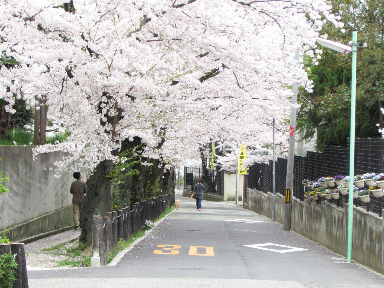 """<!--// ランダムに画像を表示するimg = new Array();// 画像のアドレスimg[0] = """"http://livedoor.blogimg.jp/hokutsu-toyo/imgs/b/f/bfb1d040.jpg"""";img[1] = """"http://livedoor.blogimg.jp/hokutsu-toyo/imgs/3/3/33bcb351.jpg"""";img[2] = """"http://livedoor.blogimg.jp/hokutsu-toyo/imgs/5/f/5f345c00.jpg"""";img[3] = """"http://livedoor.blogimg.jp/hokutsu-toyo/imgs/6/a/6a8d681b.jpg"""";img[4] = """"http://livedoor.blogimg.jp/hokutsu-toyo/imgs/e/4/e4596c95.jpg"""";img[5] = """"http://livedoor.blogimg.jp/hokutsu-toyo/imgs/4/9/49878649.jpg"""";img[6] = """"http://livedoor.blogimg.jp/hokutsu-toyo/imgs/0/a/0ac4c903.jpg"""";img[7] = """"http://livedoor.blogimg.jp/hokutsu-toyo/imgs/e/0/e069be41.jpg"""";img[8] = """"http://livedoor.blogimg.jp/hokutsu-toyo/imgs/4/3/433e4403.jpg"""";img[9] = """"http://livedoor.blogimg.jp/hokutsu-toyo/imgs/4/4/441b86c7.jpg"""";img[10] = """"http://livedoor.blogimg.jp/hokutsu-toyo/imgs/1/8/18fbe407.jpg"""";img[11] = """"http://livedoor.blogimg.jp/hokutsu-toyo/imgs/8/7/87a5912e.jpg"""";n = Math.floor(Math.random()*img.length);document.write(""""<a href='http://www.toyo-2.jp/'>"""");document.write("""" <img src='""""+img[n]+""""' border='0'>"""");document.write(""""</a>"""");//-->             ▶豊中報道。2とは          ▶豊中の話題      ▶開店・閉店      ▶グルメ             ▶景観・まちなみ      ▶ストアツアー      ▶市民            ▶トヨペディア      ▶イベント      ▶珍百景            ▶謎を追え!      ▶周辺市の話題      ▶お知らせ"""