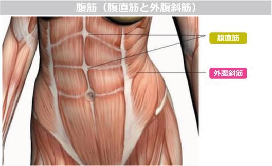 腹斜筋 画像 に対する画像結果