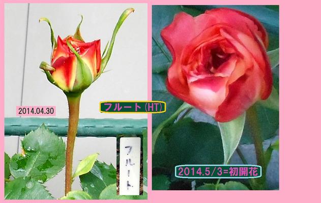 14053=フルートHTの一番開花A
