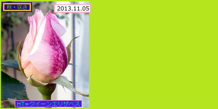 1105HT=【クイーンエリザベス】